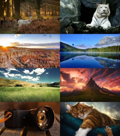 Wallpapers Mix №808