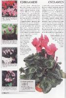 Ян Ван дер Неер - Все о 100 самых популярных комнатных растениях (2008) DJVU