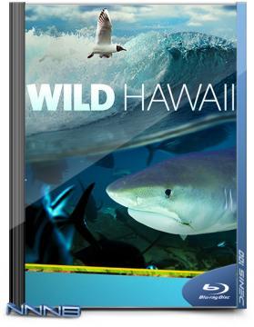 Дикие Гавайи. Тайны морских глубин / Wildes Hawaiii. Secrets of the Deep (2013) BDRip 720p от NNNB | D