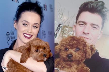 СМИ: почему пес Кэти Перри оказался у Орланда Блума за день до новостей об их расставании?