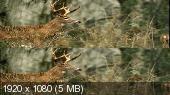 Дикие болота США / Wildes Sumpfland USA 3D Вертикальная анаморфная стереопара