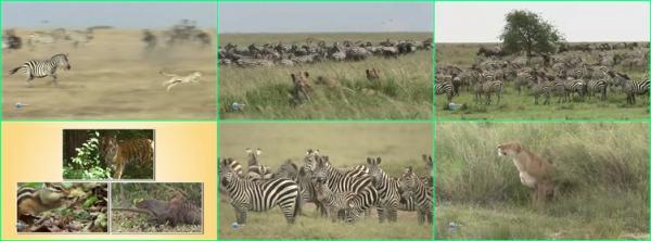 Африканская зебра / Zebra Africa (2012)